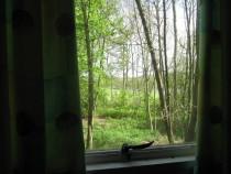 Grasshopper 5 window view js