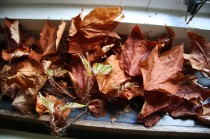Haigh 10 windowsill leaves jm