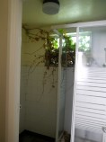 Haigh - ground floor bathroom with triffid dn