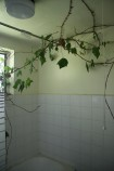 Swithen - top floor bathroom with triffid 2 jm