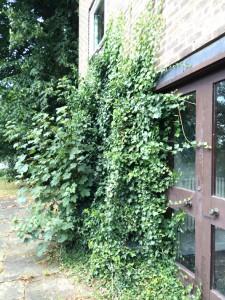 Hostel - Litherop - front door ivy dn