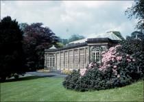 Camellia House c. 1962