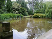Pond Adjacent to the Gymnasium